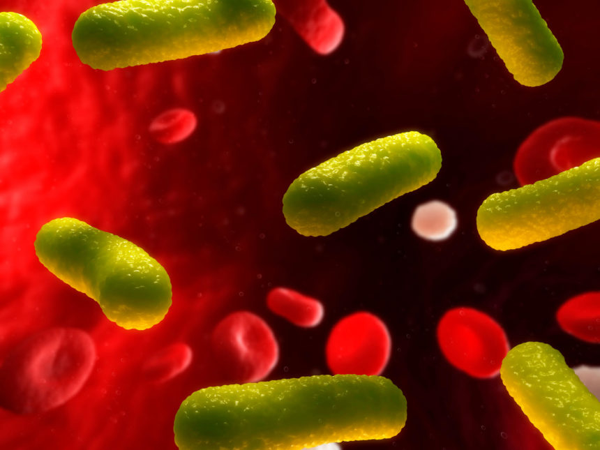 Illustration of a bacterial infection