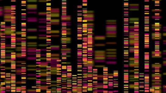 A depiction of a genome.