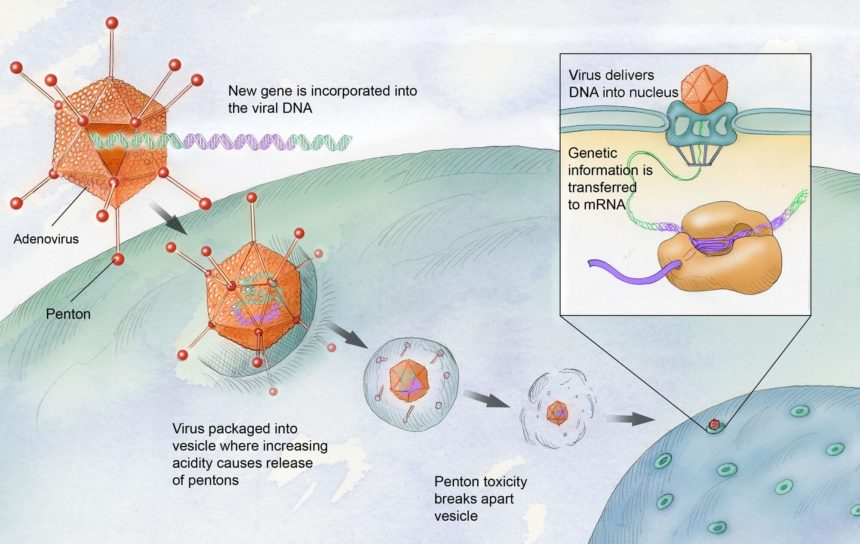 An illustration of the process of gene therapy.