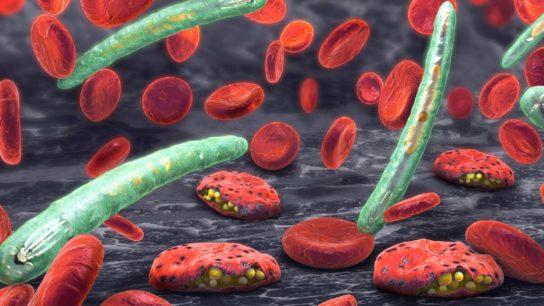plasmodium malaria